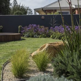 rock water feature sea lavender kangaroo paw