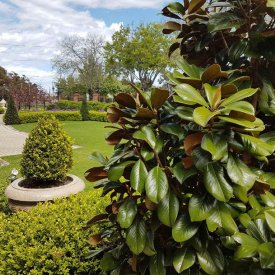 green shrubs formal garden lawn