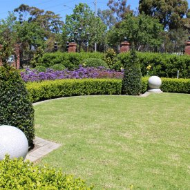 grass domes hedging purple flowers
