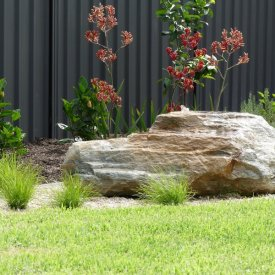 water feature rock kangaroo paw